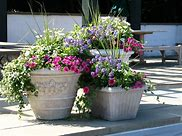 Image of beautiful garden planter