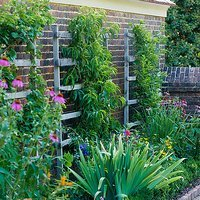 Image of garden wall with trellis and plants growing up it.